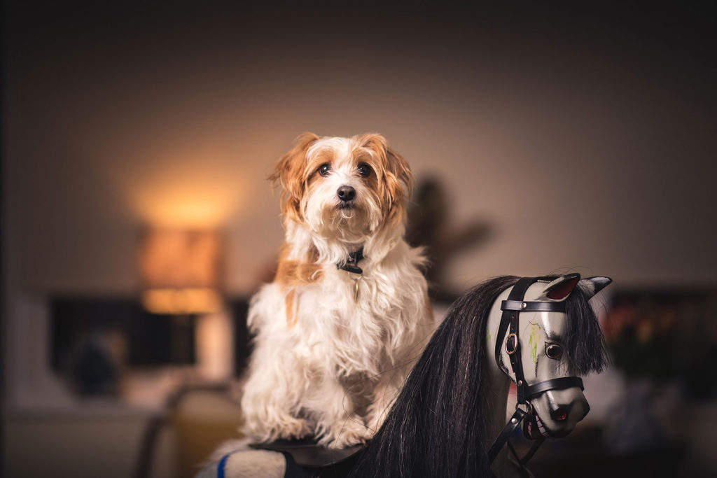 pet portrait photographer newbury berkshire